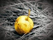 Żółty jabłko fotografia royalty free