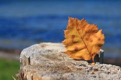 Żółty jesień liść na drzewnym fiszorku przed jeziorem obrazy royalty free