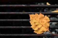 Żółty jesień liść na grillu obozowa kuchenka zdjęcia stock