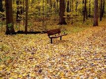Żółty jesieni Zdjęcia Stock