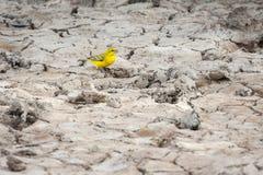 Żółty kanarek na abstrakcjonistycznym przedpolu fotografia royalty free