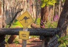 Żółty kangura znak ostrzegawczy obrazy royalty free