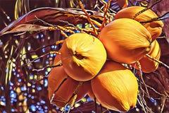 Żółty koks na drzewko palmowe cyfrowej ilustraci Coco dokrętki wiązki sztandaru kolorowy szablon Egzotyczna natury roślina obraz stock