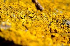 Żółty koloru pole Obrazy Royalty Free