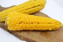 Żółty kukurydzanego cob jarosza jedzenie Zdjęcie Royalty Free