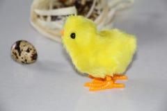 Żółty kurczątko blisko gniazdeczka W gniazdeczku jest przepiórek jajkami fotografia stock