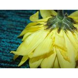 Żółty kwiat 06 Zdjęcia Royalty Free