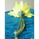 Żółty kwiat 03 Zdjęcia Royalty Free