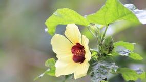 Żółty kwiat i mrówka zdjęcia stock