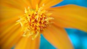 Żółty kwiat który patrzeje bliżej do tła zdjęcia royalty free