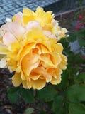 Żółty kwiat przy kwiatem Obrazy Stock