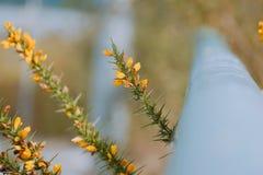 Żółty kwiat w ogródzie obrazy stock