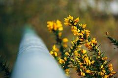 Żółty kwiat w ogródzie obrazy royalty free