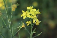 Żółty kwiat w zimie obraz stock