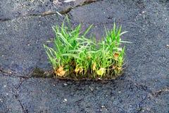 Żółty kwiatu dorośnięcie na krekingowej ulicie, nadziei pojęcie zdjęcia royalty free