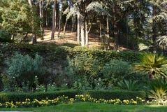 Żółty kwiatu dorośnięcie wzdłuż obciętych zielonych krzaków przy dnem skłon z drzewami r na nim Zdjęcie Royalty Free