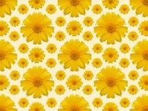 Żółty kwiatu powtórki tło Fotografia Stock