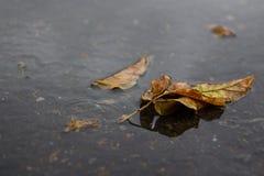 Żółty liść kłama w kałuży obrazy stock