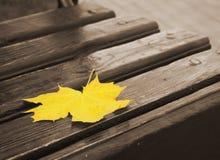 Żółty liść klonowy kłama na monochromatycznej drewnianej ławce zdjęcie royalty free