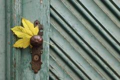 Żółty liść klonowy na drewnianym drzwiowym tle zdjęcie stock