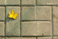 Żółty liść na ceglanej drodze Fotografia Royalty Free