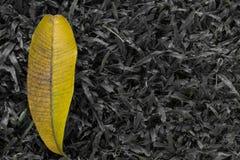 Żółty liść na ciemnej roślinie Obrazy Royalty Free