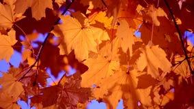 Żółty liść na gałąź na tle zamazany kolor żółty opuszcza w górę zdjęcie wideo