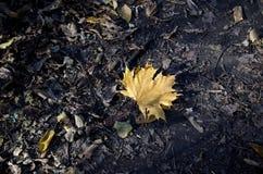 żółty liść na lasowej ścieżce Obrazy Royalty Free