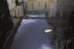 Żółty liść na mokrym bruku zdjęcia royalty free