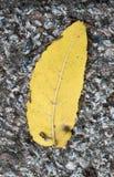 Żółty liść na ziemi Zdjęcie Royalty Free