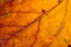 Żółty liścia tło Fotografia Stock