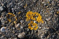 Żółty mech na kamiennej rockowej teksturze fotografia stock