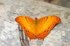 żółty motyl Zdjęcia Stock