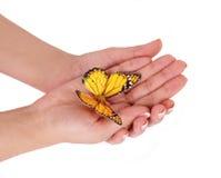 Żółty motyl na żeńskich rękach odizolowywać na biel Fotografia Royalty Free
