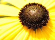 Żółty natury Zdjęcia Royalty Free