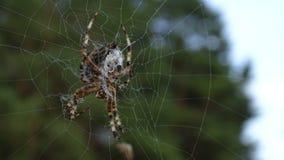 Żółty pająk obrazy royalty free