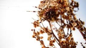 Żółty pająk zdjęcie royalty free