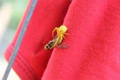 Żółty pająka łasowania szerszeń Obraz Royalty Free