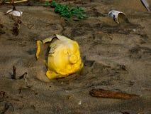Żółty plastikowy prosiątko bank wywalał na karaibskiej plaży blisko Cartagena Colombia kontaminowania obraz stock