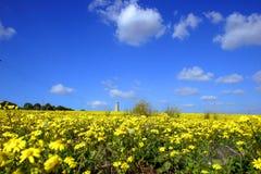 Żółty pola Obrazy Royalty Free