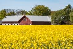 Żółty pole podczas lata obrazy stock