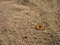 Żółty pomarańczowy motyl na ziemi Zdjęcie Royalty Free