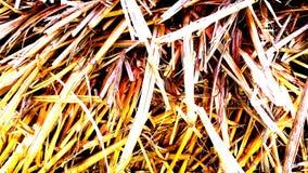 Żółty pomarańczowy tło od suchej pszenicznej słomy obraz stock