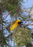Żółty ptaka fotografia royalty free
