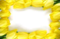 Żółty ramowy Fotografia Royalty Free
