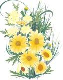 Żółty rumianku Obrazy Stock