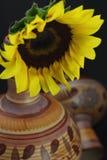 Żółty słonecznikowy Obraz Royalty Free