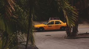 Żółty taxi w palmowych liściach Zdjęcia Stock