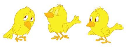 Żółty trzy kurczaka Fotografia Royalty Free