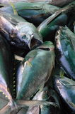 Żółty tuńczyka błękitnopłetwego Obrazy Royalty Free